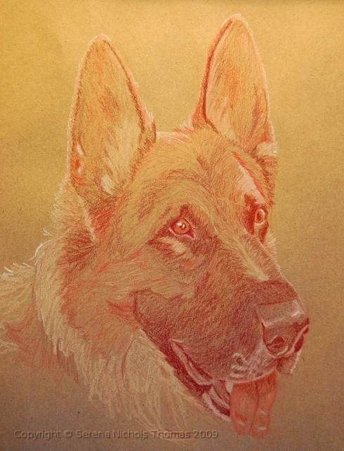"""Wilson"" — colored pencil on brown paper 2"